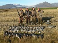 Goose hunting in Iceland